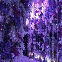 3-12-2016 Boon Loke _ Sui Li Intercontinental Grand ball room 5